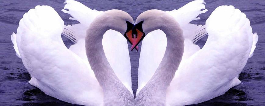 بی تو عشق بی معناست